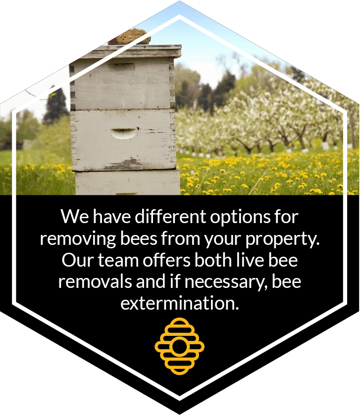 bee removal bee extermination