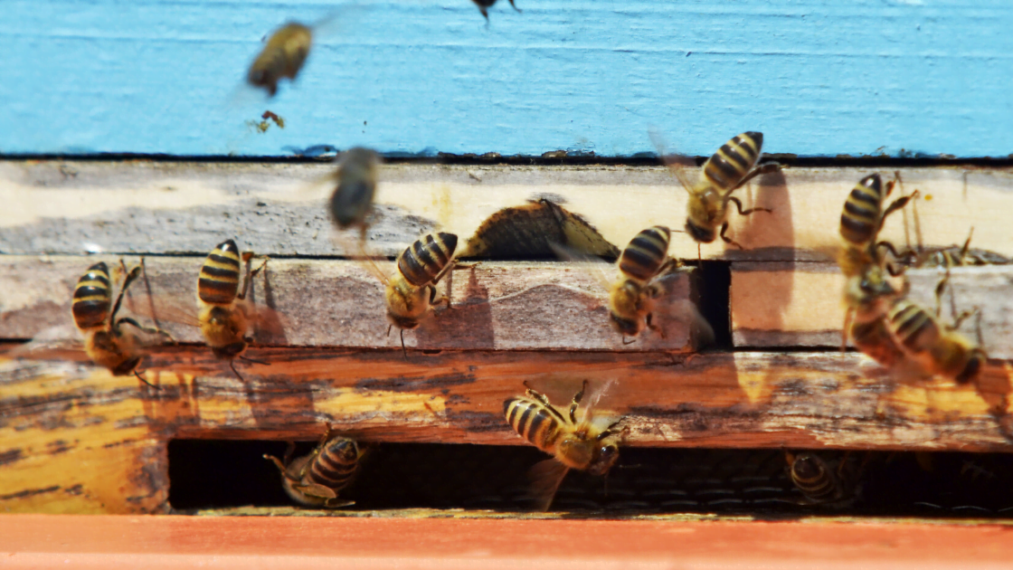 Bee proof your home