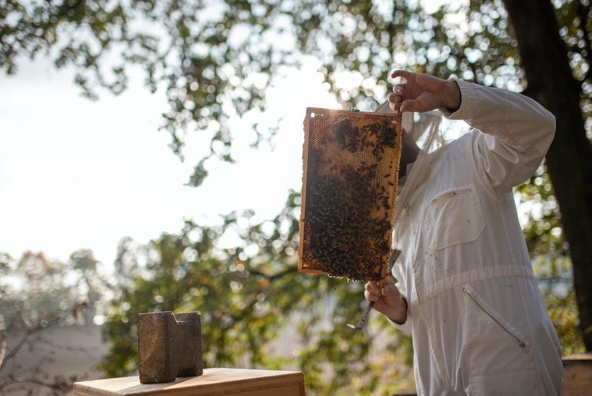 beekeepinghistory
